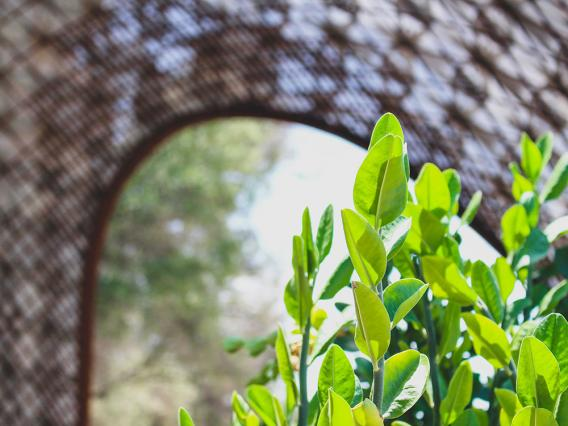 Growing leaves in front of CAPLA's gridshell